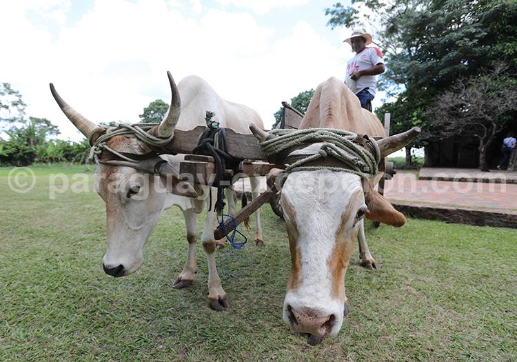 Agriculture à Piribebuy, Paraguay