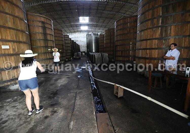 Fermentation du rhum, fabrique du rhum Fortin, Paraguay