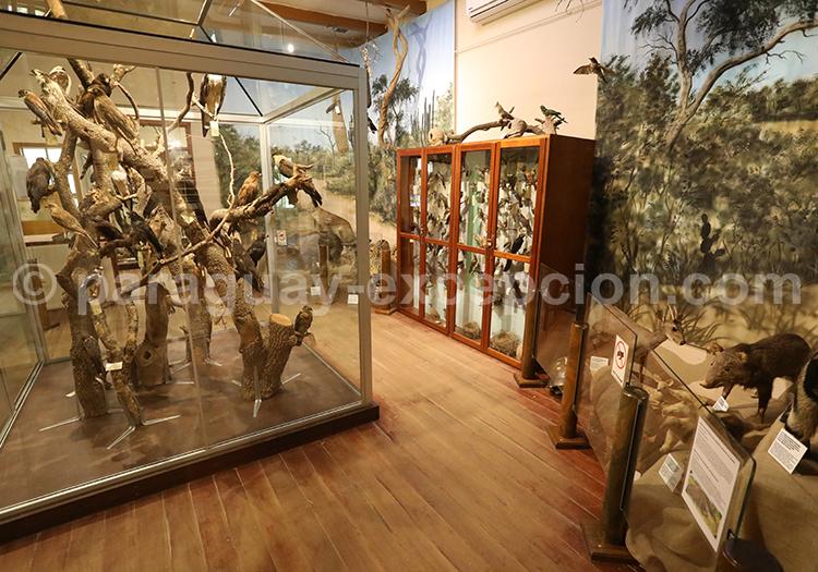 Musée Scientifique Filadelfia Chaco