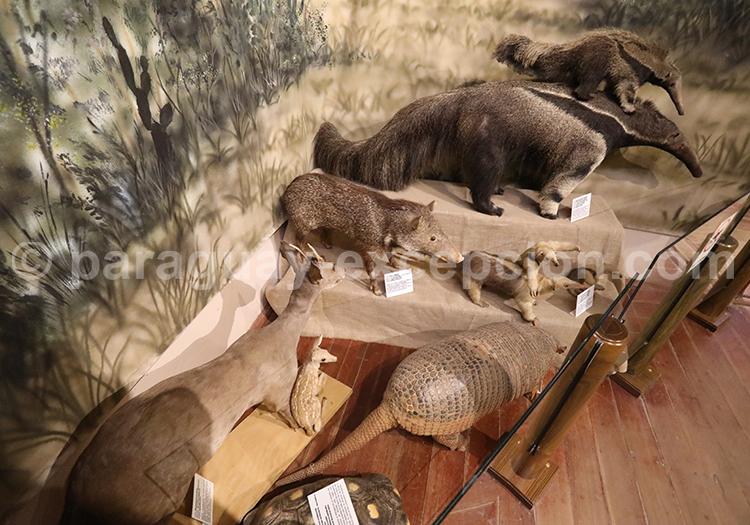 Musée d'histoire naturelle de Filadelfia Paraguay