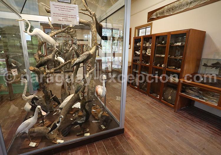 Musée Scientifique Filadelfia Paraguay