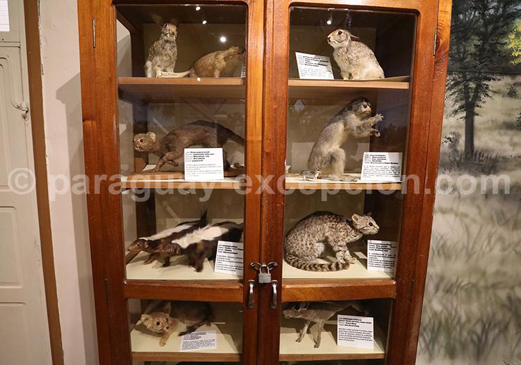 Musée sur la faune du Chaco Filadelfia
