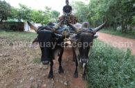 Agriculture au Paraguay, la sylviculture, ressource du pays