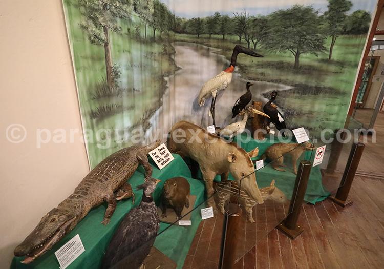 Musée Scientifique animalier du Chaco