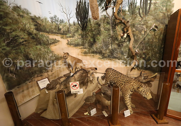 Exposition sur les animaux du Gran Chaco
