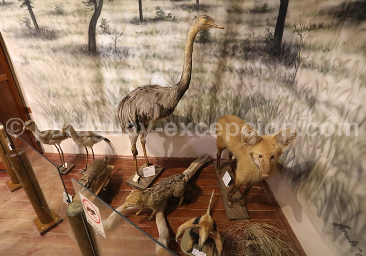 Curiosités naturelles du Chaco