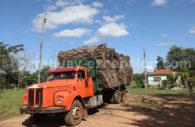La sylviculture au Paraguay
