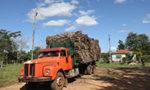 L'économie de la sylviculture au Paraguay