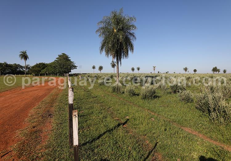 Partir au Paraguay dans la région Yvy