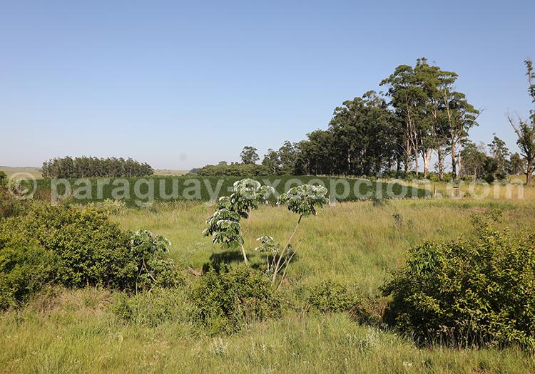 Visiter la région Yvy, au Paraguay
