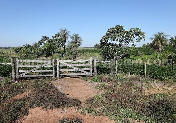 Estancia du sud du Paraguay, Yvy