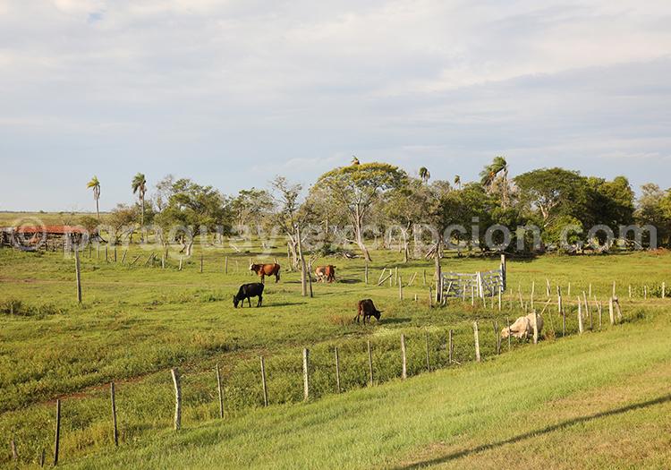 Prés du Paraguay, région Yvy
