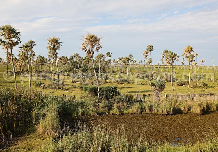 Les marais de la région Yvy, Paraguay