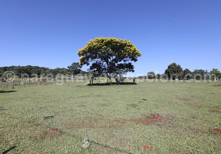 Paysages de la campagne paraguayenne, Yvy