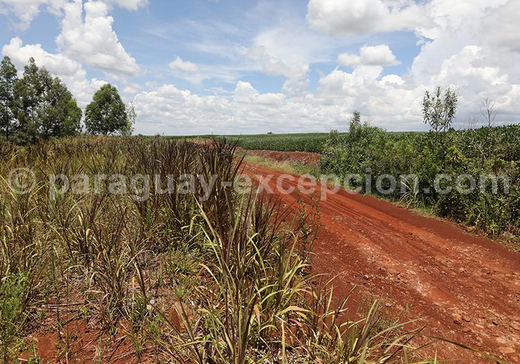 Champs dans le sud du Paraguay, Yvy