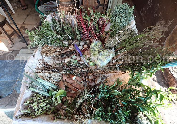 Les plantes du Paraguay, marché Abasto, Ciudad del Este