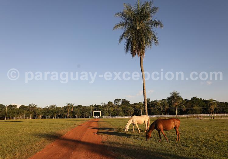 Aller à l'Estancia Tacuaty, Yvy, Paraguay