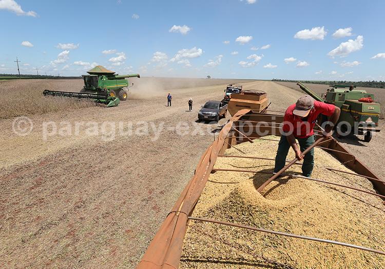 L'agriculture du Paraguay, campo du Paraná
