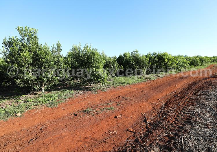 Chemin de terre rouge à Bella Vista, Paraguay