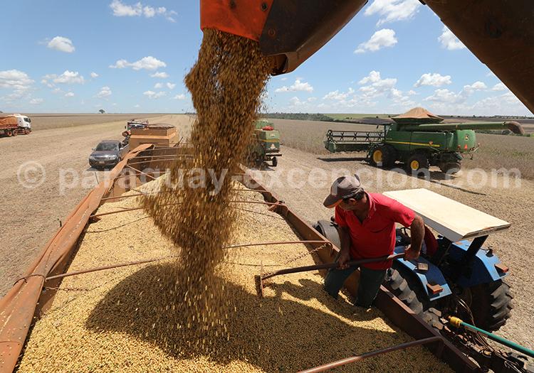 Céréales du Paraguay, Paraná