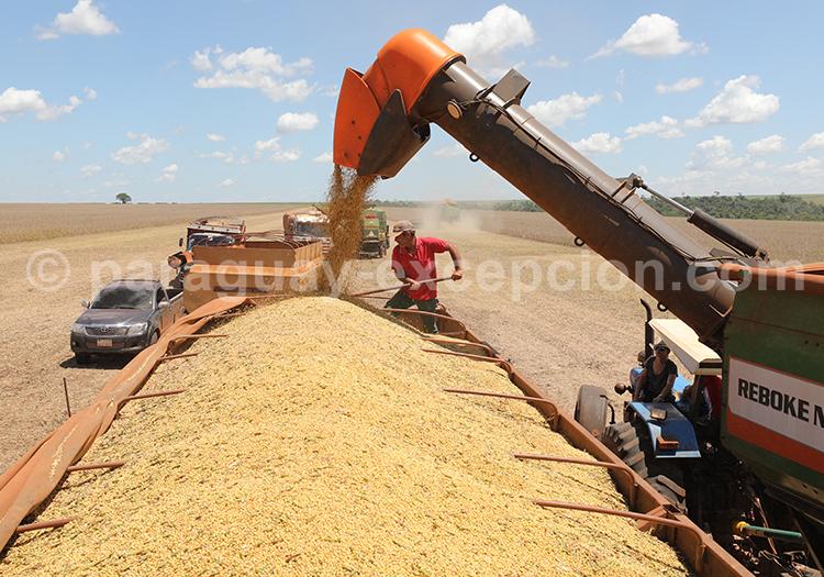 Céréales du Paraguay, récolte dans la région Paraná