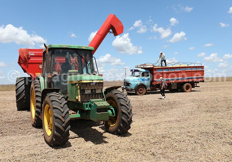 Tracteur dans un champs au Paraguay dans la région Paraná