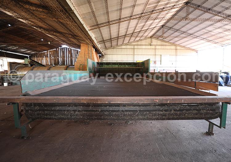 Production de mate, YerbaSelecta, Bella Vista, Yvy, Paraguay