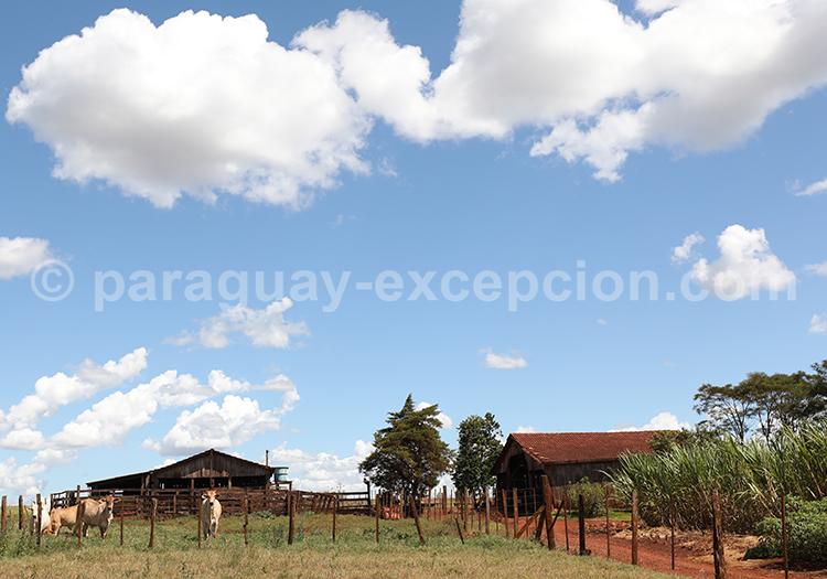 Ferme agricole du Paraná, Paraguay