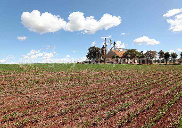 Agriculture dans la région du Paraná, Paraguay