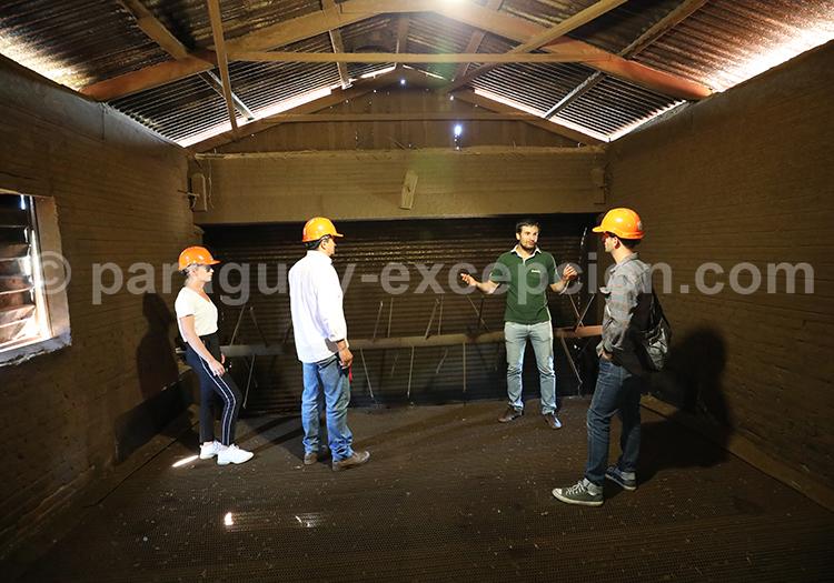 Comment aller à la manufacture Yerba Selecta au Paraguay