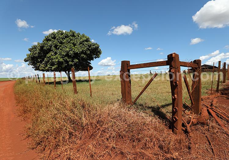 Visiter le Paraguay et découvrir l'agriculture du pays