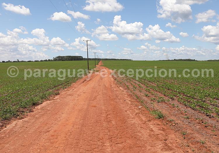 Chemin agricole de la région Paraná, Paraguay