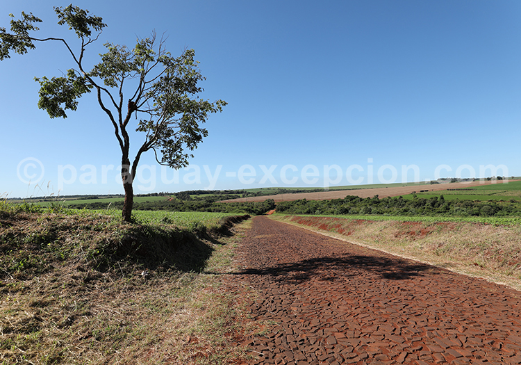 Champs du Paraná, agriculture du Paraguay
