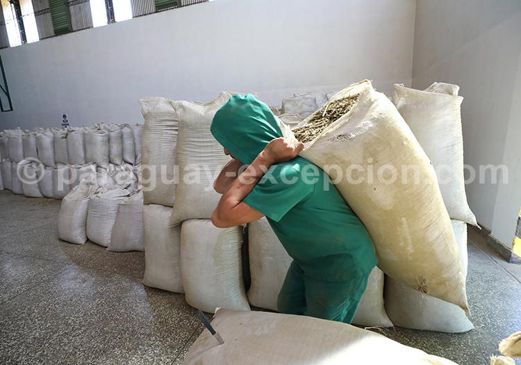 Production de mate, Yerba Selecta la meilleure du Paraguay