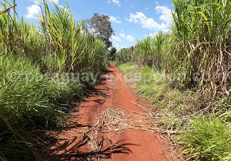 Que voir dans la campagne de la région Paraná, Paraguay