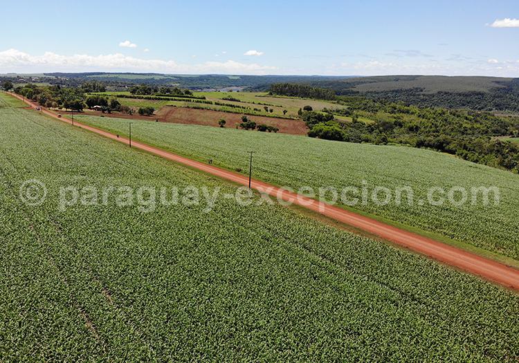 Vue aérienne des champs du Paraguay