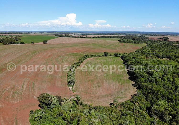Panorama sur la campagne du Paraná, région du Paraguay