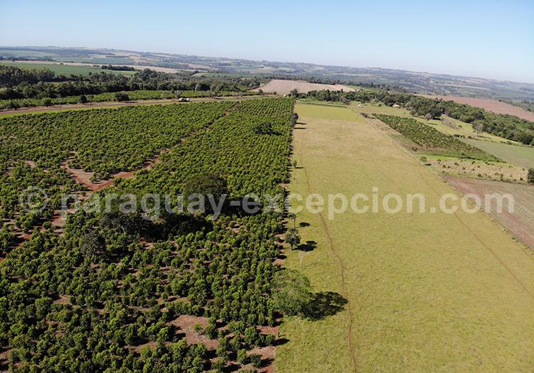 Vue aérienne sur les champs de Bella Vista, Paraguay