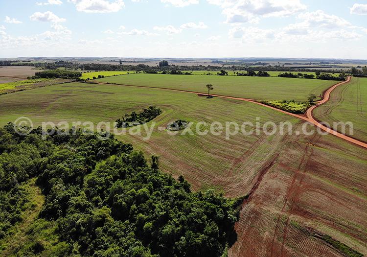 Vue panoramique sur la campagne paraguayenne, Paraná