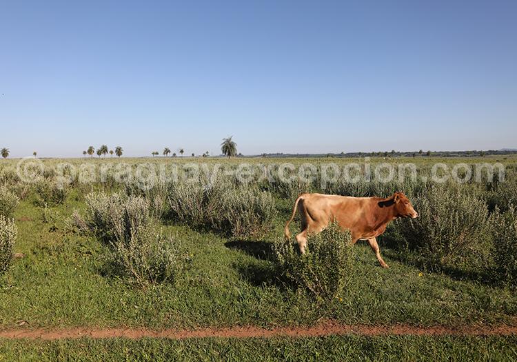 Gauchos au Paraguay, visiter une estancia dans la région Yvy : Estancia Tacuaty