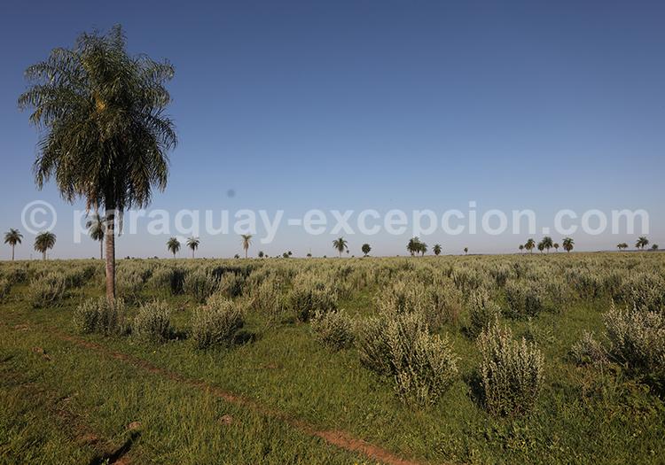 Magnifique estancia du Paraguay : Estancia Tacuaty