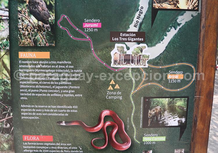 Carte du domaine des Tres Gigantes, Chaco, Paraguay