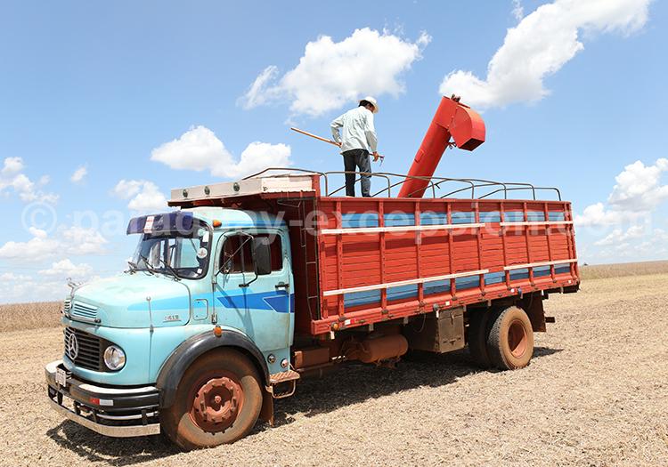 L'agriculture au Paraguay, voyage au coeur de la région Paraná