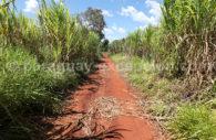 Economie de la cannes à sucre au Paraguay