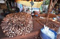 Le manioc au Paraguay