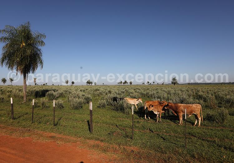 Dans quelle estancia dormir au Paraguay : Estancia Tacuaty