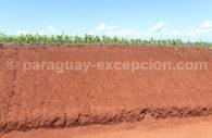 Pousse de maïs, Paraguay
